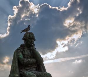 Bird on the head